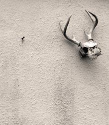 Art: The Door Skull Series by Artist Chris Jeanguenat