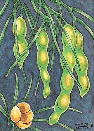 Art: Peas by Artist Erika