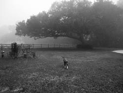 Art: The Oak and the Dog by Artist Chris Jeanguenat