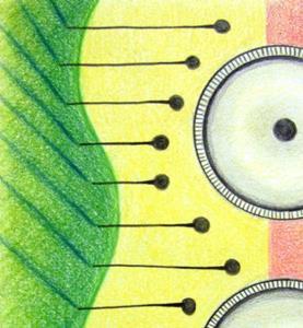 Detail Image for art Buoyant