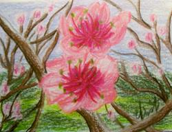 Art: PEACH BLOSSOMS by Artist christi lynn schwartzkopf