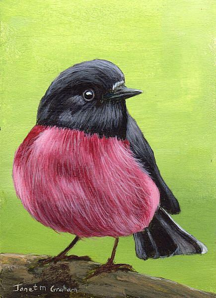 Art: Pink Robin ACEO by Artist Janet M Graham