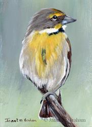 Art: Dickcissel ACEO by Artist Janet M Graham