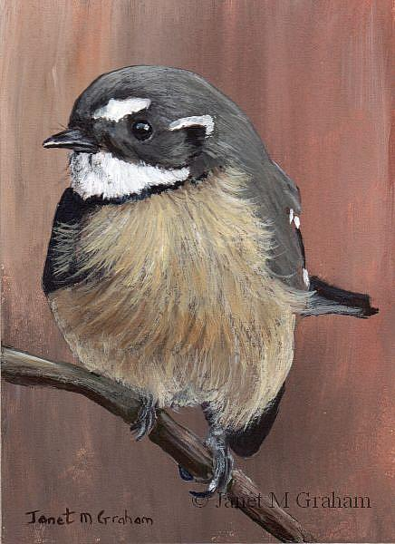 Art: Grey Fantail ACEO by Artist Janet M Graham