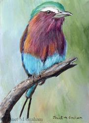 Art: Lilac Breasted Roller ACEO by Artist Janet M Graham