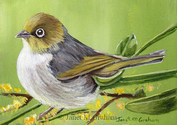 Art: Silvereye ACEO by Artist Janet M Graham