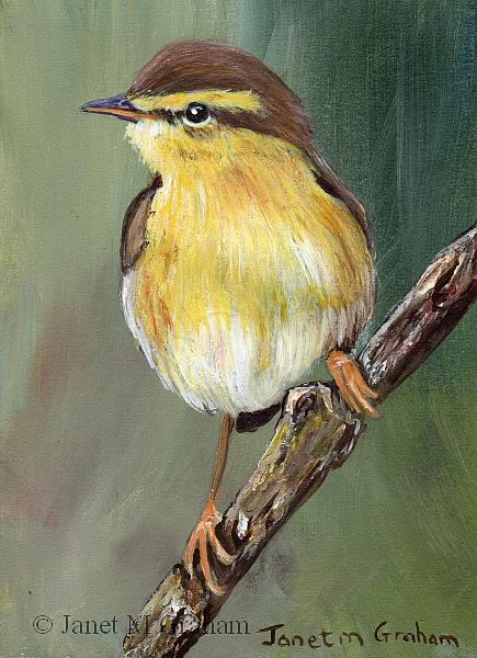 Art: Willow Warbler ACEO by Artist Janet M Graham