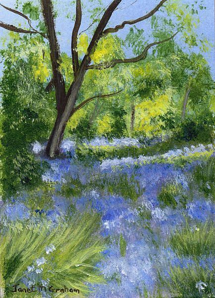 Art: Bluebells ACEO by Artist Janet M Graham