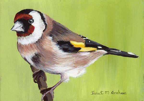 Art: European Goldfinch ACEO by Artist Janet M Graham