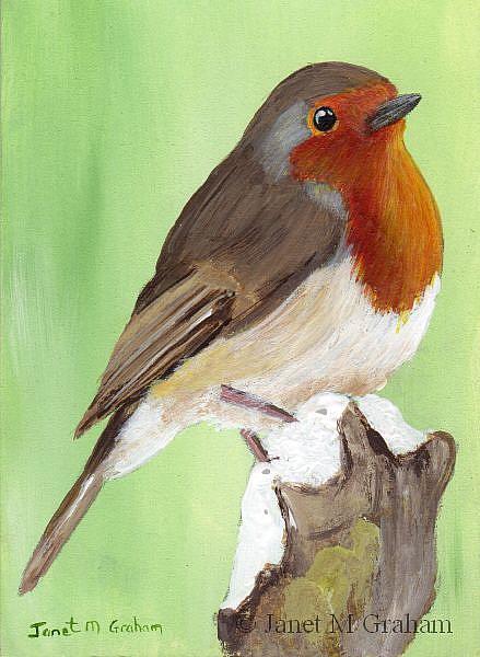 Art: European Robin ACEO by Artist Janet M Graham