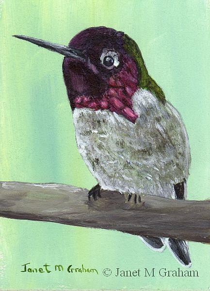 Art: Humming Bird ACEO by Artist Janet M Graham