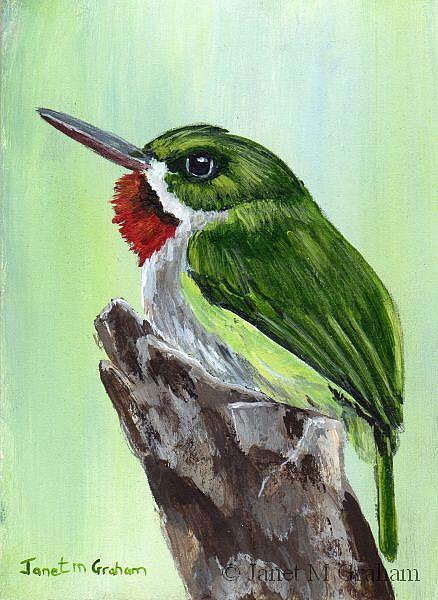 Art: Puerto Rican Tody ACEO by Artist Janet M Graham