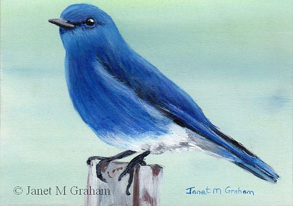 Art: Mountain Bluebird ACEO by Artist Janet M Graham