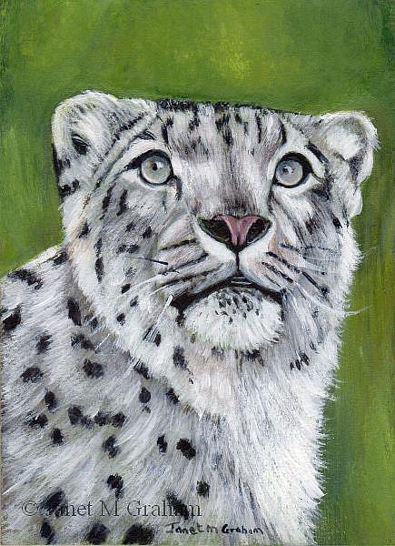 Art: Snow Leopard ACEO by Artist Janet M Graham