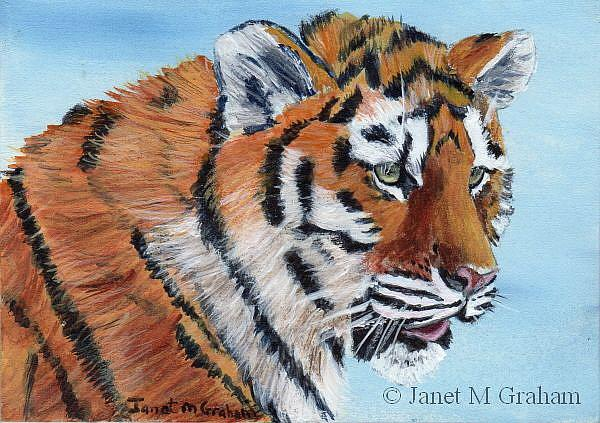 Art: Tiger Cub ACEO by Artist Janet M Graham