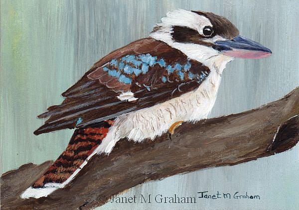 Art: Kookaburra ACEO by Artist Janet M Graham