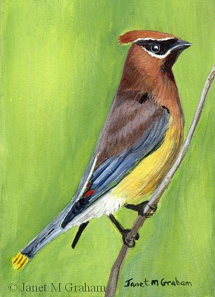 Art: Cedar Waxwing ACEO by Artist Janet M Graham