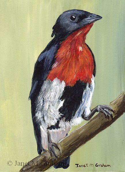 Art: Mistletoebird ACEO by Artist Janet M Graham