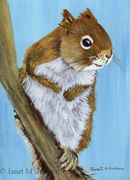 Art: Red Squirrel ACEO by Artist Janet M Graham