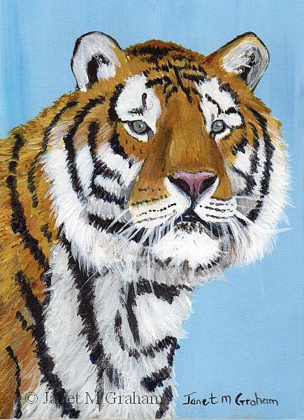 Art: Tiger ACEO by Artist Janet M Graham