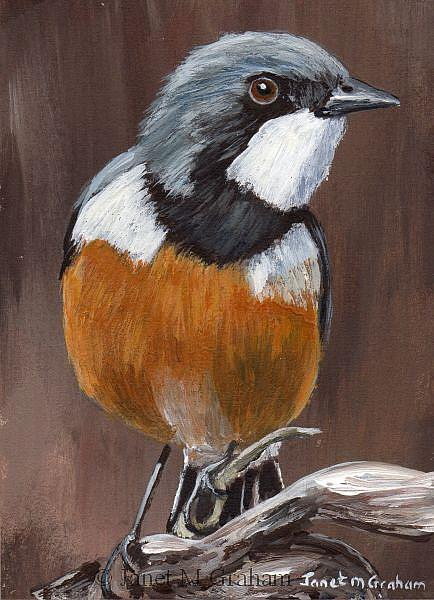Art: Rufous Whistler ACEO by Artist Janet M Graham