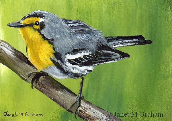 Art: Grace's Warbler ACEO by Artist Janet M Graham