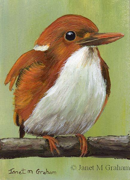 Art: Madagascar Pygmy Kingfisher ACEO by Artist Janet M Graham