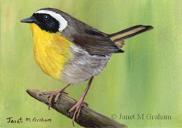 Art: Common Yellowthroat ACEO by Artist Janet M Graham