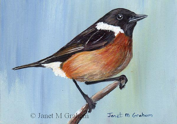 Art: European Stonechat ACEO by Artist Janet M Graham
