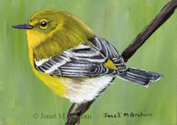 Art: Pine Warbler ACEO by Artist Janet M Graham