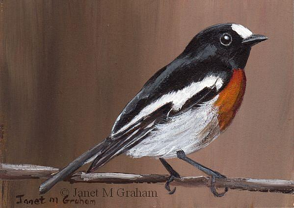 Art: Scarlet Robin ACEO by Artist Janet M Graham