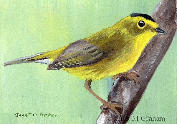 Art: Wilson's Warbler ACEO by Artist Janet M Graham