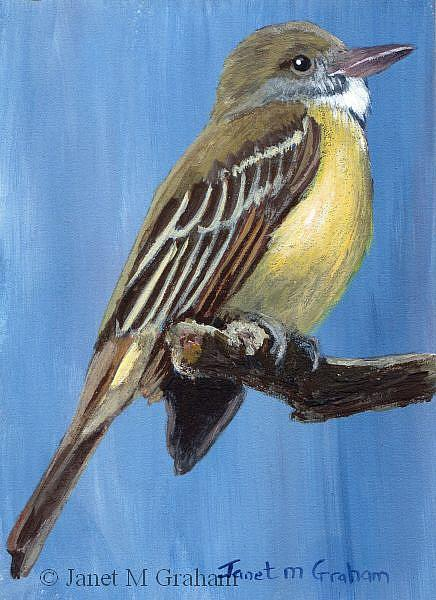 Art: Great Crested Flycatcher ACEO by Artist Janet M Graham
