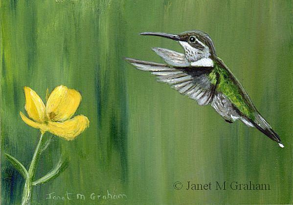 Art: Hummingbird ACEO by Artist Janet M Graham