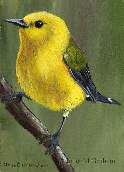 Art: Prothonotary Warbler ACEO by Artist Janet M Graham