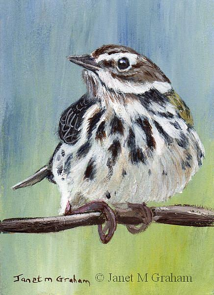 Art: Meadow Pipit ACEO by Artist Janet M Graham
