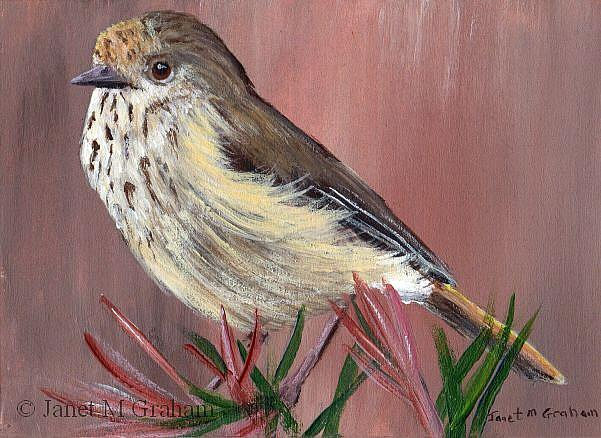 Art: Brown Thornbill ACEO by Artist Janet M Graham