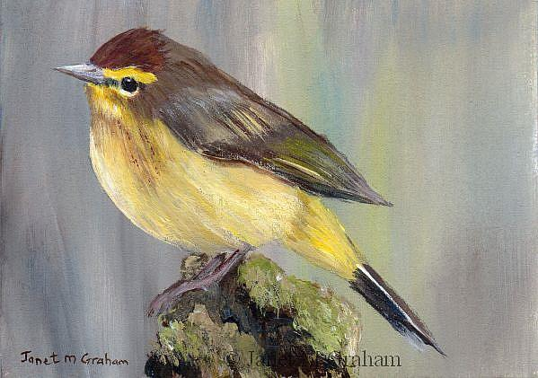 Art: Palm Warbler ACEO by Artist Janet M Graham