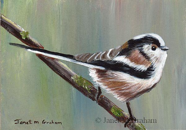 Art: Long Tailed Tit ACEO by Artist Janet M Graham