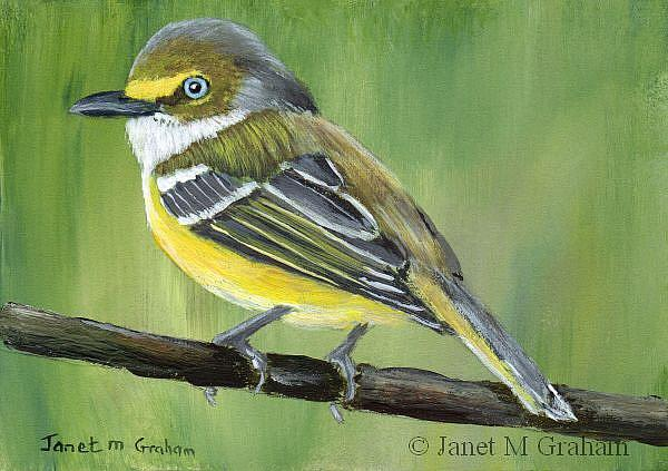 Art: White Eyed Vireo ACEO by Artist Janet M Graham