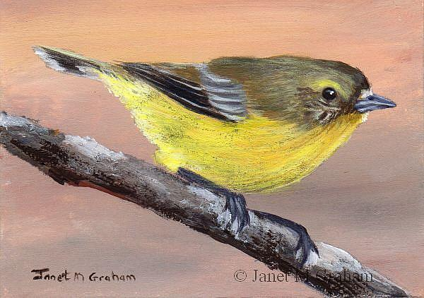 Art: Yellow Thornbill ACEO by Artist Janet M Graham