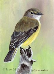Art: Lemon Bellied Flycatcher ACEO by Artist Janet M Graham