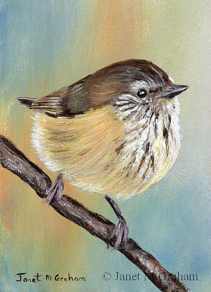 Art: Striated Thornbill ACEO by Artist Janet M Graham