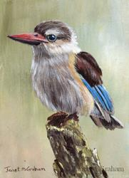 Art: Brown Hooded Kingfisher ACEO by Artist Janet M Graham