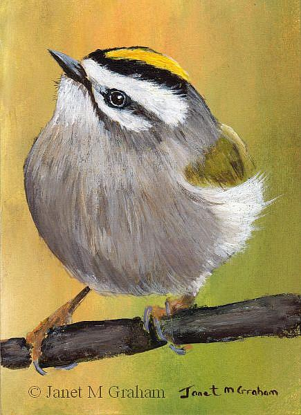 Art: Golden Crowned Kinglet ACEO by Artist Janet M Graham