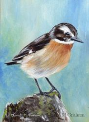 Art: Whinchat ACEO by Artist Janet M Graham