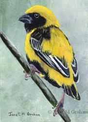 Art: Yellow Crowned Bishop ACEO by Artist Janet M Graham