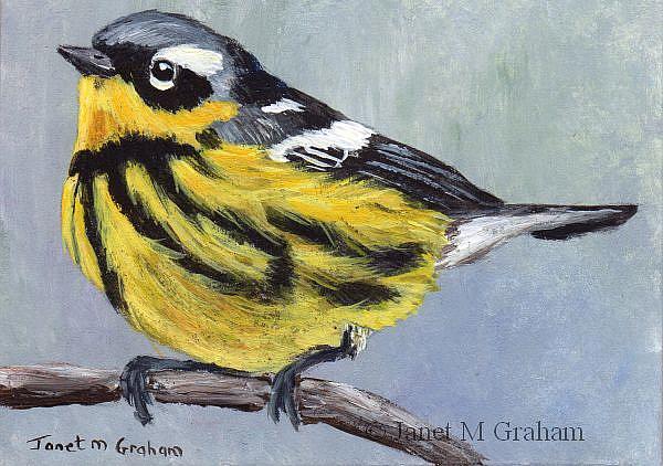 Art: Magnolia Warbler ACEO by Artist Janet M Graham