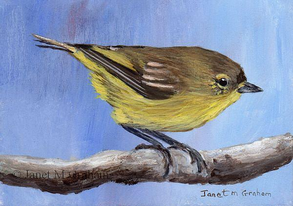 Art: Yellow Thornbill ACEO by Artist Janet M Graham