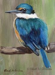 Art: Sacred Kingfisher ACEO by Artist Janet M Graham